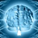 La Neurociencia en cuestión